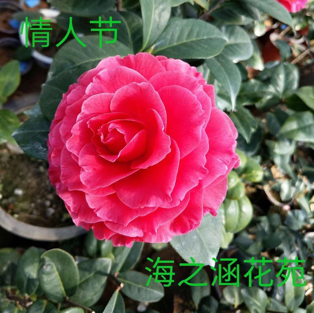 花卉与花卉装饰画_花卉猫花卉交易平台_花卉知识